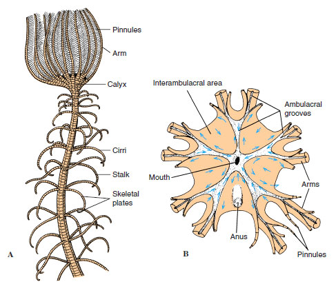 What's This?! Crinoids | BLUFF COUNTRY FOSSILS
