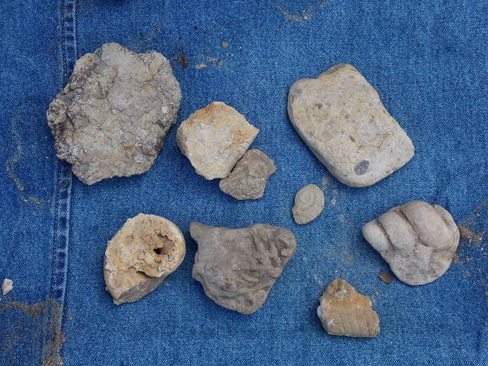 "Uses for ""Junk"" Fossils 