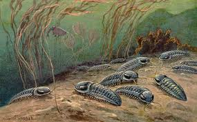 Artist's rendition of live trilobites.