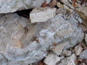 2 in 1 rock