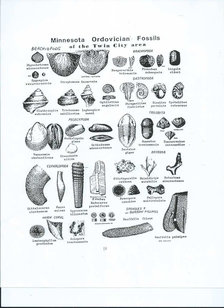 Lilydale Fossil ID Sheet