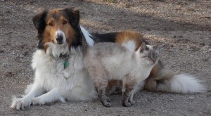 Yes, there are Collie dogs and cats.