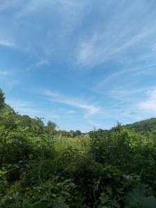 blue skies over the wetlands
