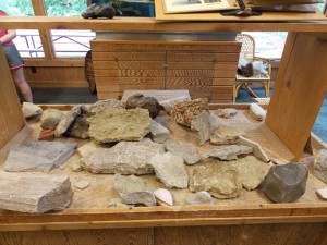 Fossils to Touch!