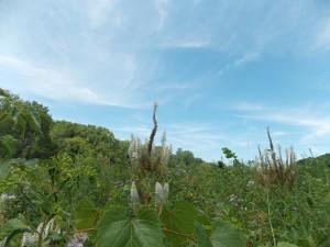 pond prairie and blue skies 2