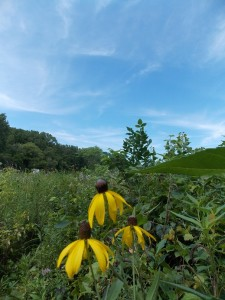 wild flowers and blue skies