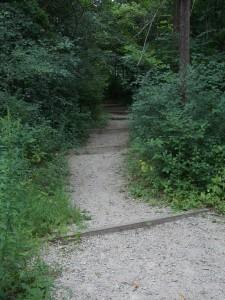 woods hiking trail