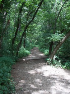 woods trails