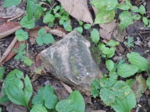 flow stone on trail