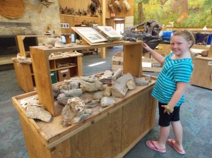 fossils at qhnc better