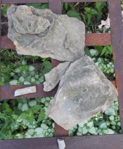 fossils qhnc
