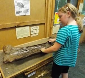 hadrosaur bone