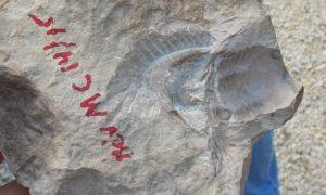 Trilobite Cast
