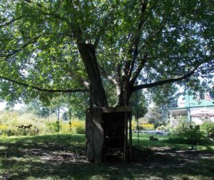 playground-tree