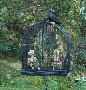 two-skeleton-birds