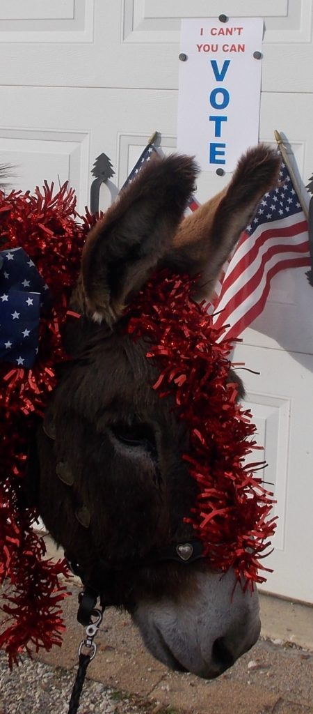 Coco, the donkey, getting out the vote!